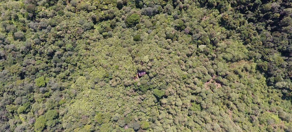 Restoring Forest