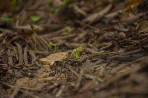 Beautiful new sprout of Kandri